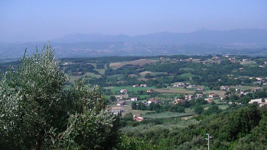 local views 4